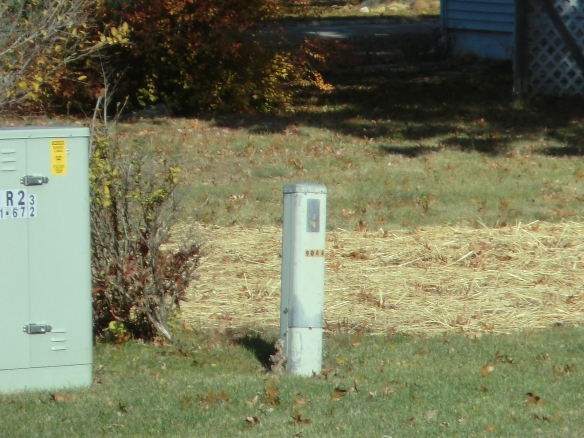 Stump by telephone box.