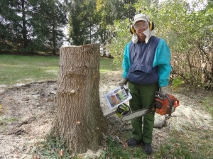 A box elder tree that needed to be cut down. I have a plan!