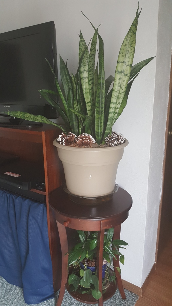 """Pinecones in plants """"Whiter than Snow"""" frugalfish.org"""
